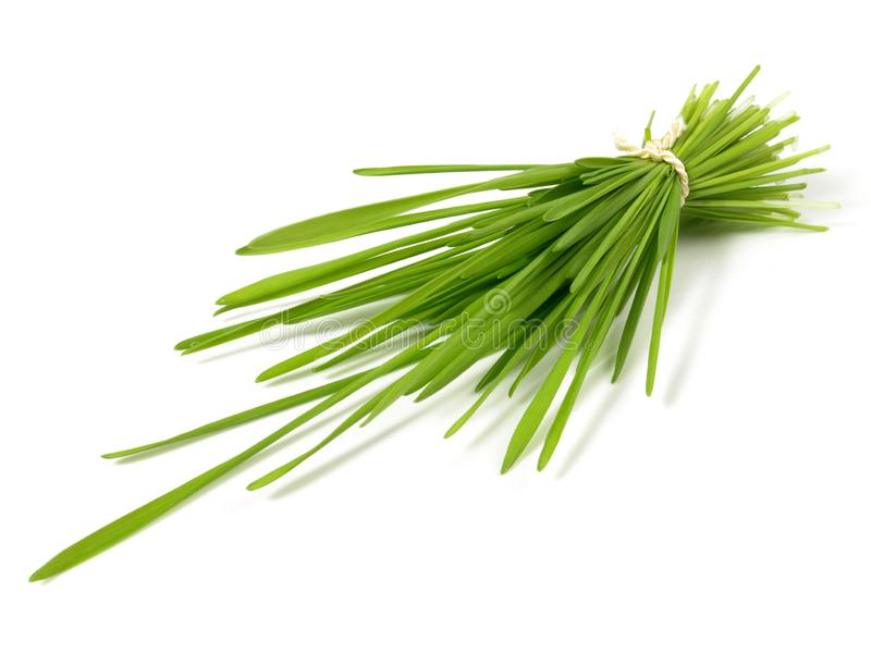 Wheatgrass связывает - здоровое питание стоковое изображение rf