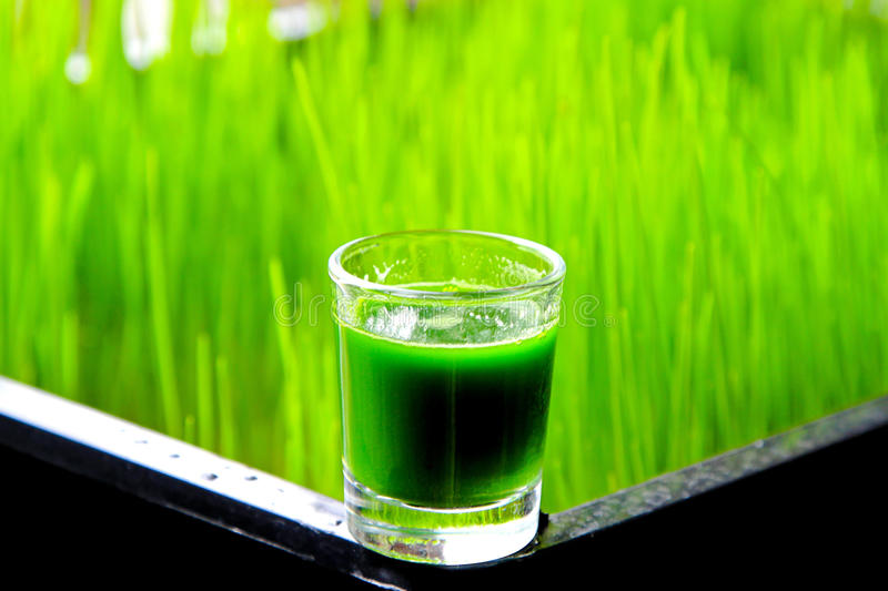 Wheatgrass. Glass of organic wheatgrass green juice with grass in background royalty free stock images