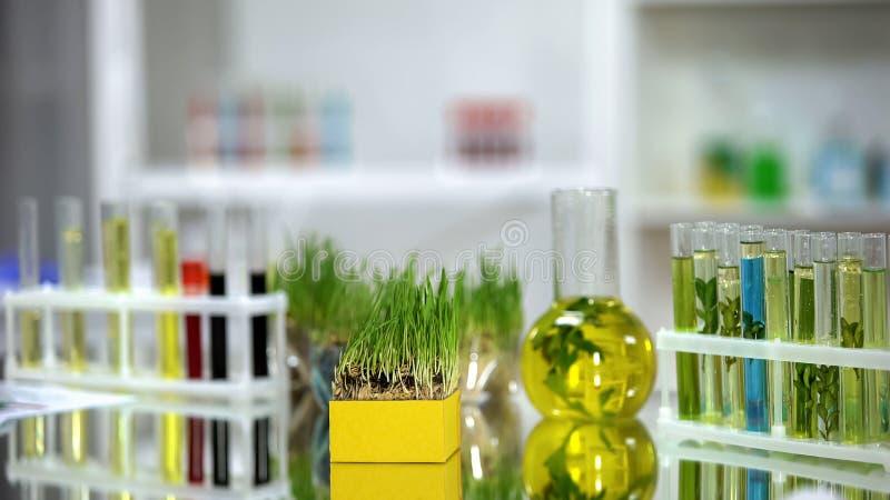 Wheatgrass et tubes avec les pesticides color?s et les engrais se tenant sur la table images libres de droits