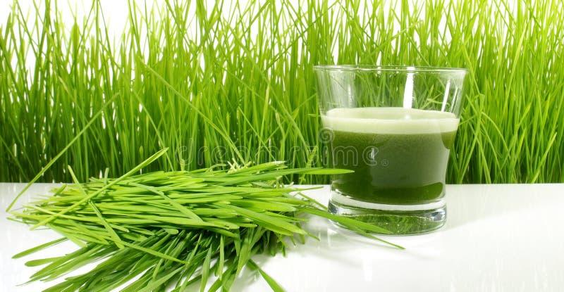 Wheatgrass fruktsaft - sund näring royaltyfri fotografi