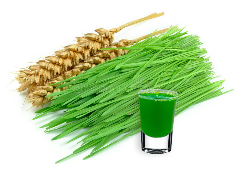 Wheatgrass juice. Isolated on white background royalty free stock photos
