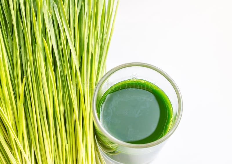 Wheatgrass juice one shot, on white background. stock photo