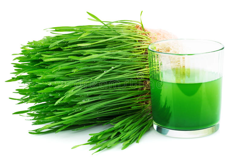 Wheatgrass juice with sprouted wheat stock photo