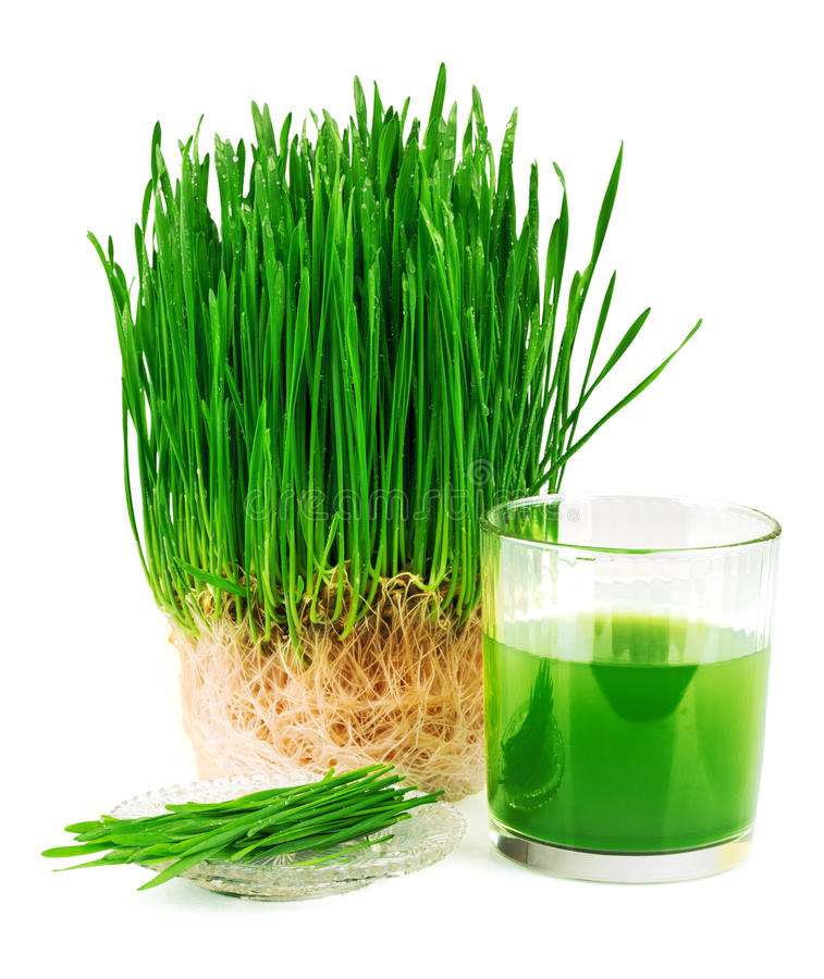 Wheatgrass juice with sprouted wheat on the plate. Isolated on white background stock photo