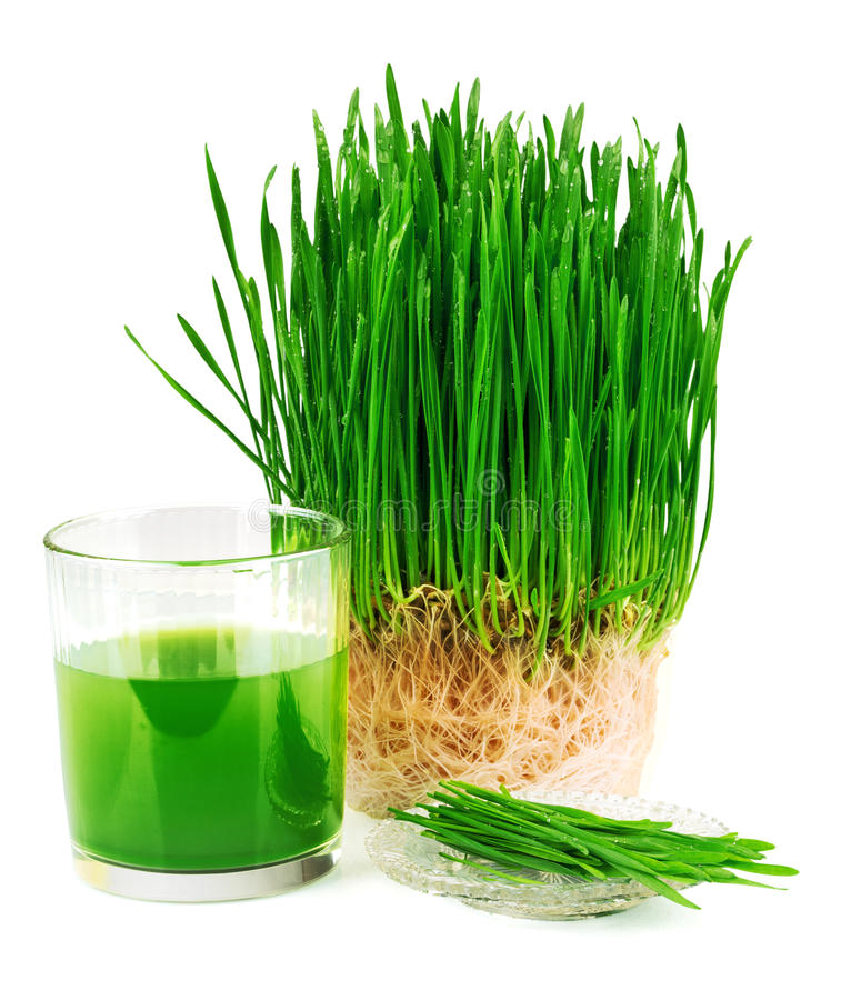 Wheatgrass juice with sprouted wheat on the plate royalty free stock photo