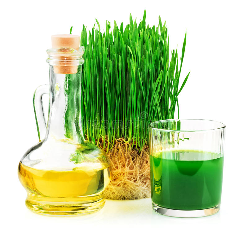 Wheatgrass juice with sprouted wheat and wheat ger. M oil isolated on white background stock image