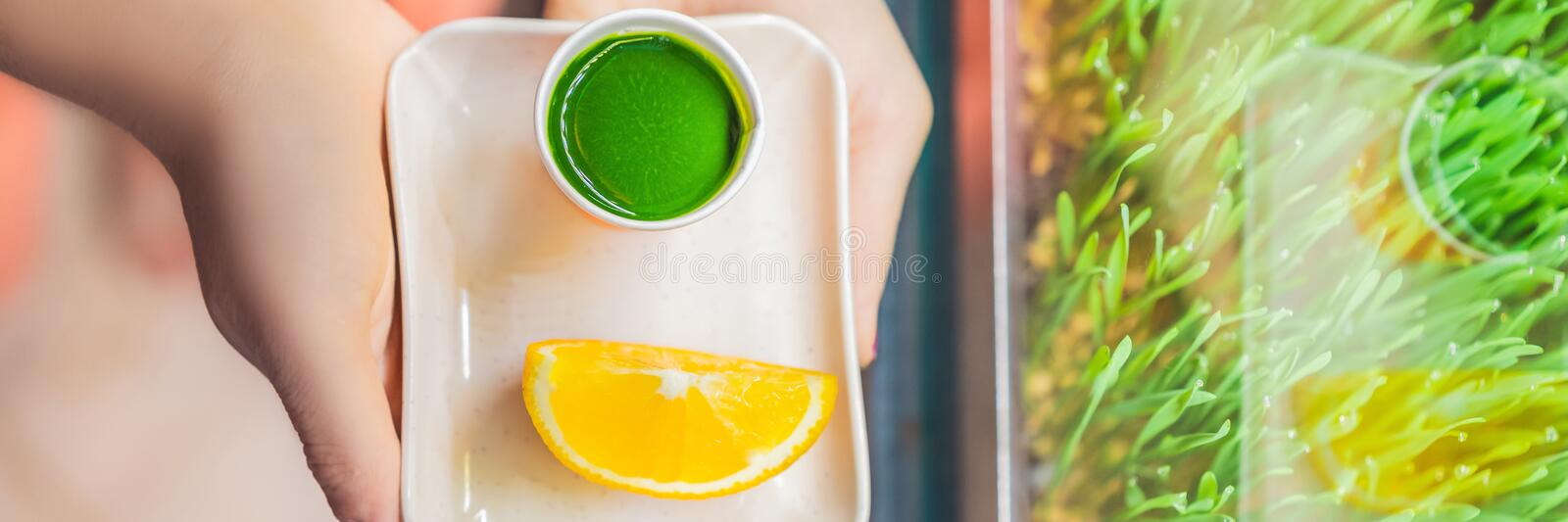 Wheatgrass shot. Juice from wheat grass. Trend of health. wheat grass BANNER, LONG FORMAT royalty free stock image