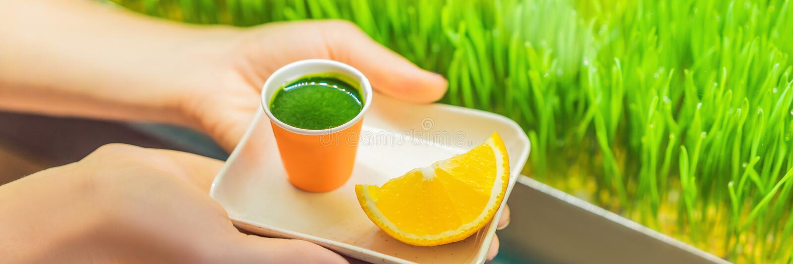 Wheatgrass shot. Juice from wheat grass. Trend of health. wheat grass BANNER, LONG FORMAT royalty free stock photos