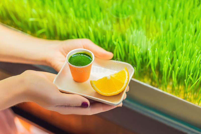 Wheatgrass shot. Juice from wheat grass. Trend of health. wheat grass royalty free stock images