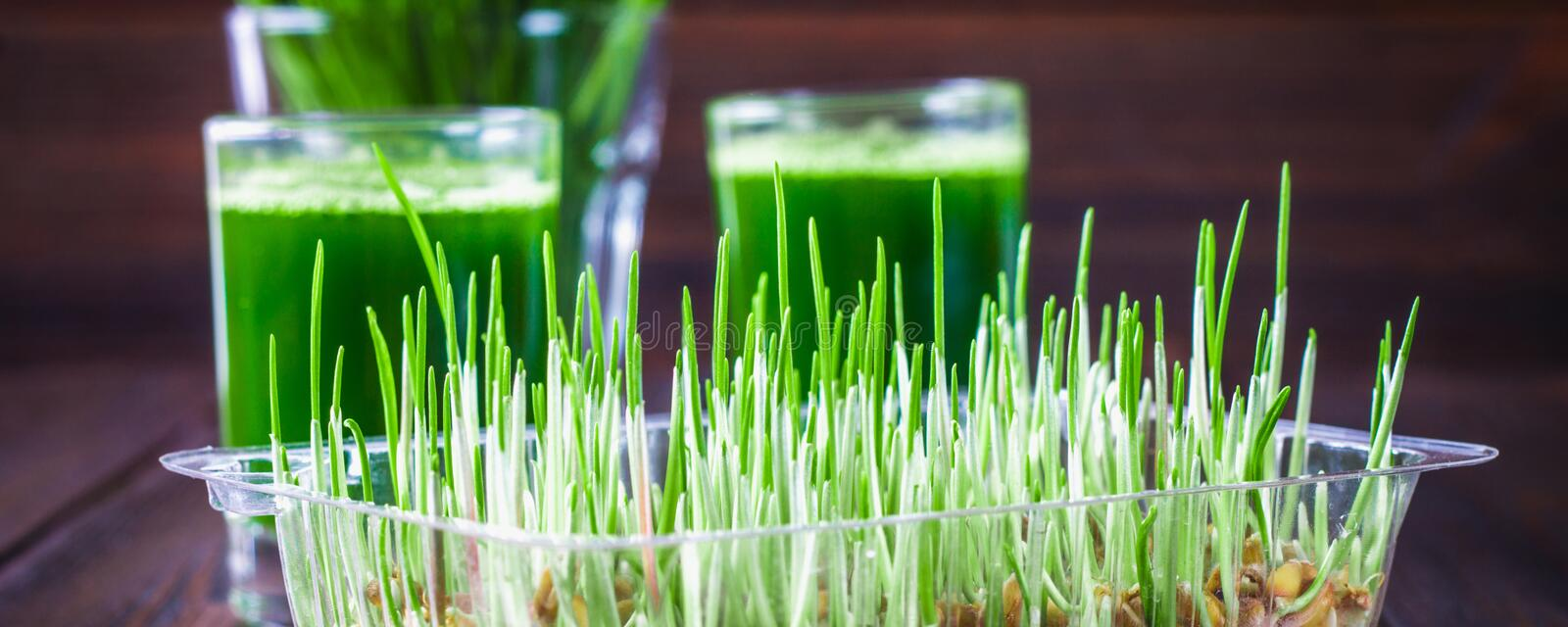 Wheatgrass shot. Juice from wheat grass. Trend of health. Wheatgrass shot. Juice from wheat grass. Trend of health royalty free stock photo