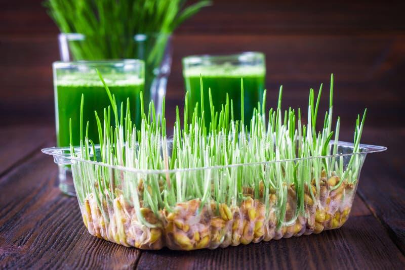 Wheatgrass skott Fruktsaft från vetegräs Trend av hälsa arkivbilder