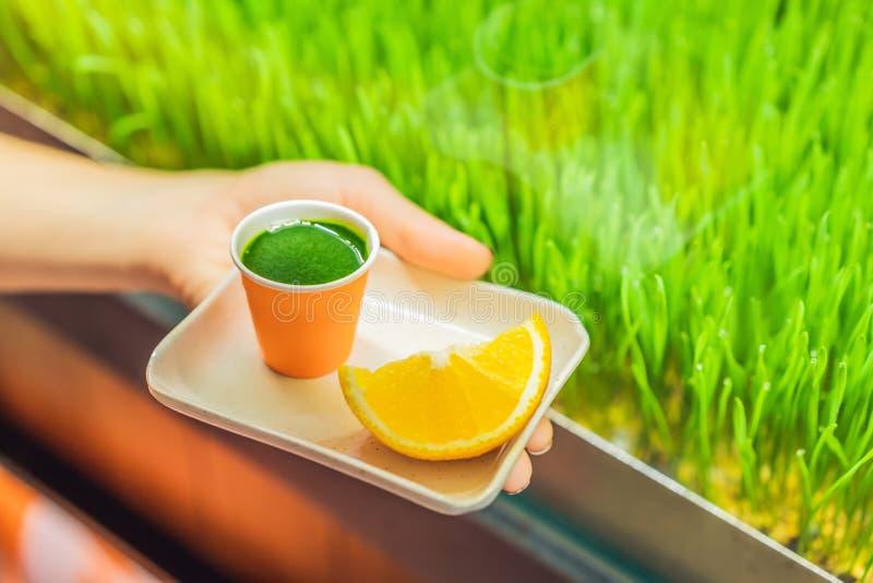 Wheatgrass skott Fruktsaft fr?n vetegr?s Trend av h?lsa Vetegr?s royaltyfri fotografi
