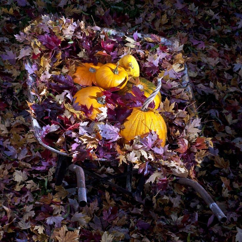 Download Wheel Barrel Full Of Leaves And Pumpkins Stock Image - Image: 21905497