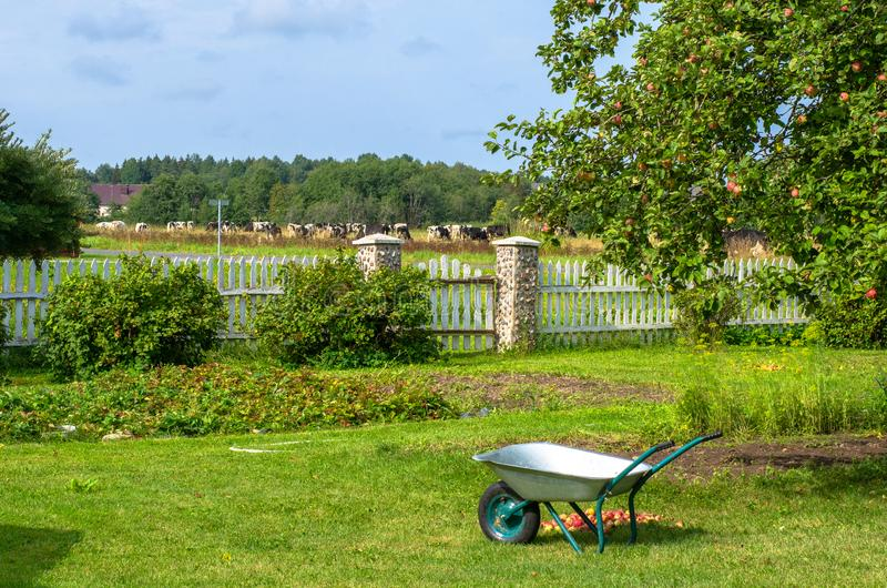 A wheel barrow in garden by an apple tree royalty free stock photography