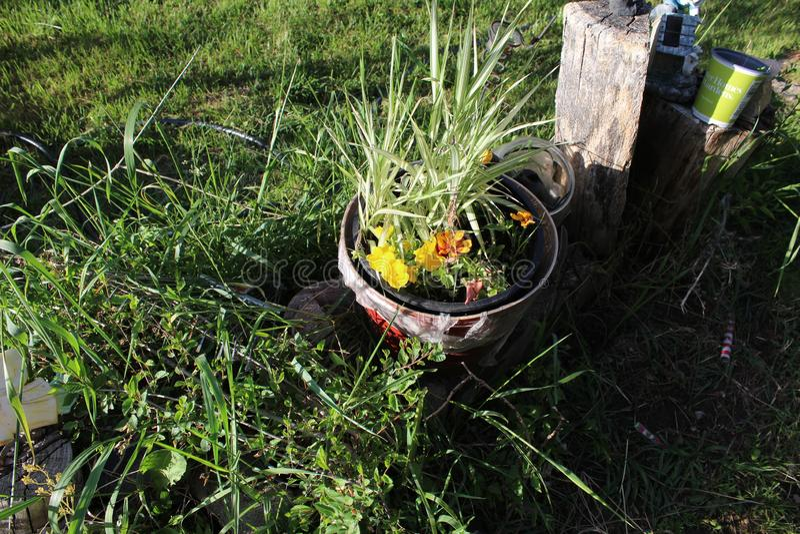 Wheelbarrel planter ha stock photography