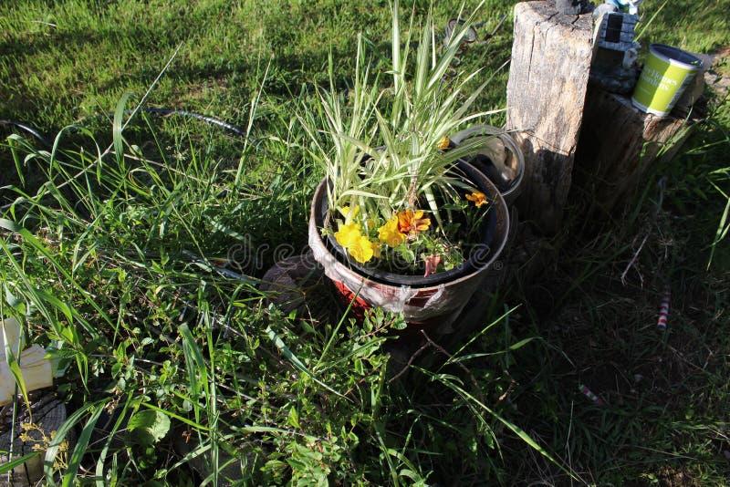 Wheelbarrelplanter Ha stock fotografie