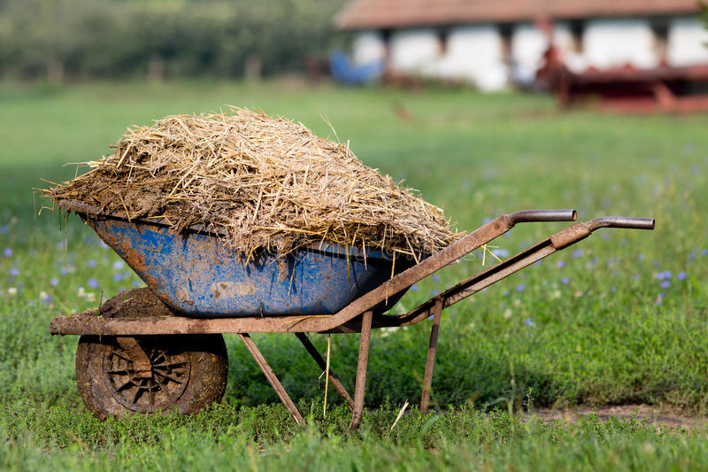 Wheelbarrow με το λίπασμα βοοειδών στοκ εικόνες με δικαίωμα ελεύθερης χρήσης