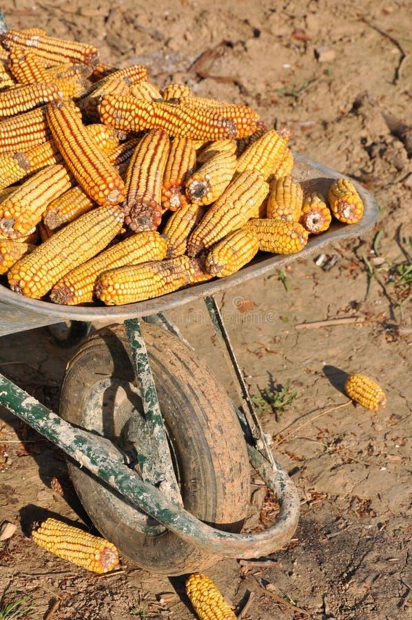 Wheelbarrow and corn royalty free stock photos