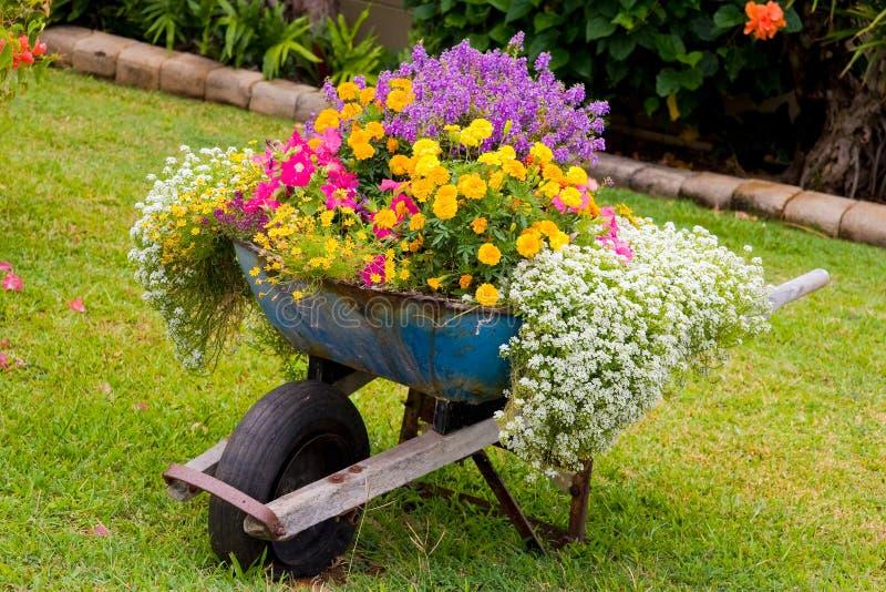 Wheelbarrow Flowers stock photos
