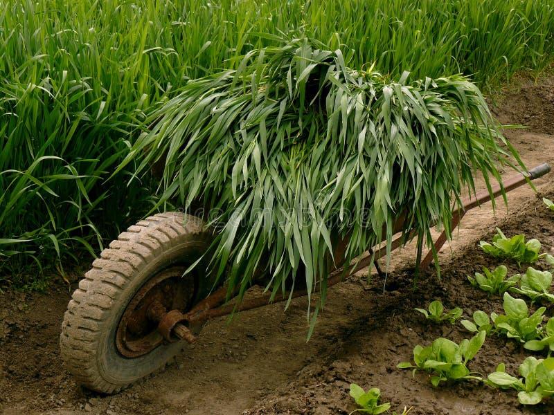 Download Wheelbarrow Pełno Zielona Trawa Obraz Stock - Obraz złożonej z warzywo, chochoł: 41952289