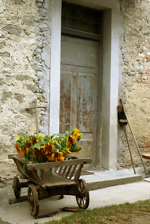 Wheelbarrow with sunflowers stock photos