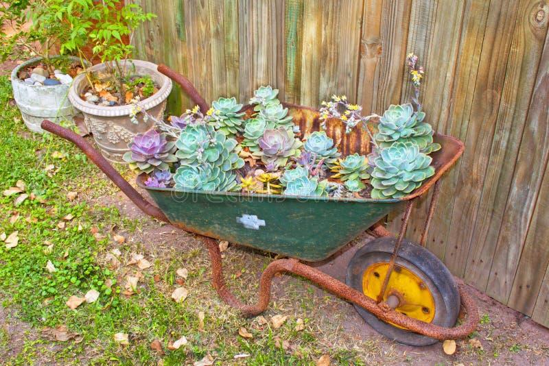 Wheelbarrow Z Pustynnymi różami obrazy royalty free
