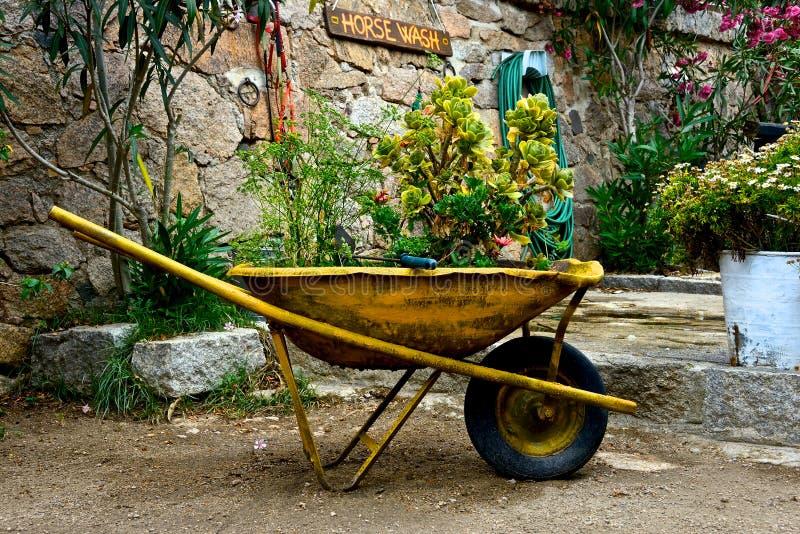 Wheelbarrow z roślinami zdjęcia royalty free
