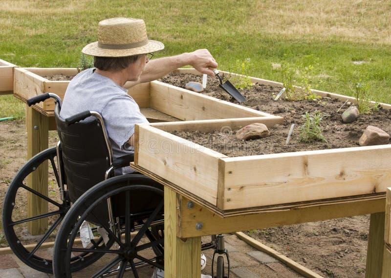 Wheelchair Gardener. Man in a wheelchair working a garden at an enabling bench royalty free stock photography