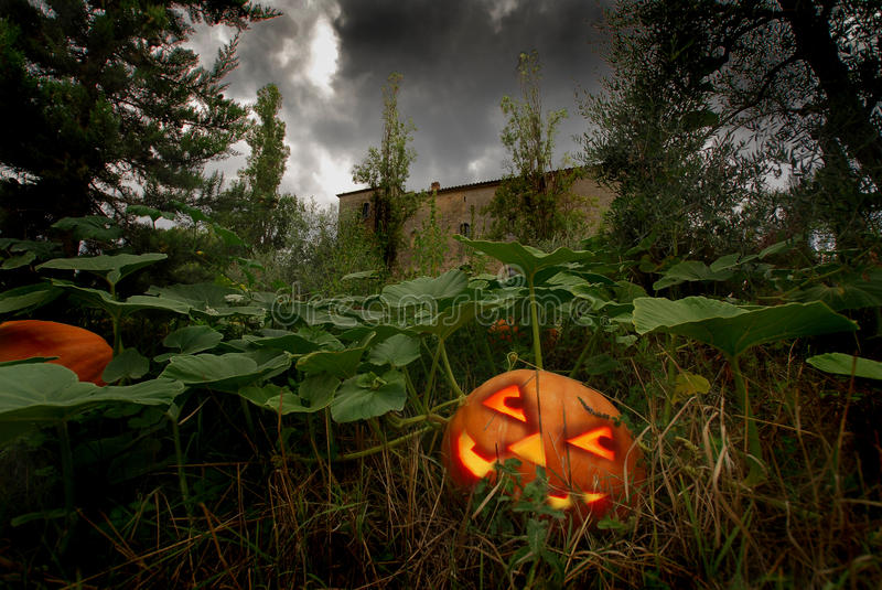 Where the haunted pumpkin born. Halloween pumpking in the garden of a Tuscan casltle stock images