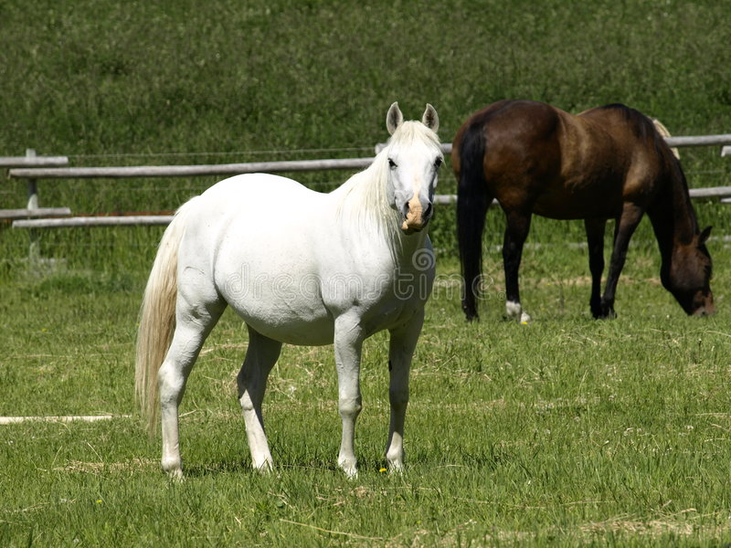 Download Where Is The Knight In Shining Armer. Stock Image - Image of brown, horses: 7475083
