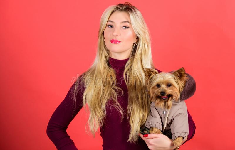 Which dog breeds should wear coats. Girl hug little dog in coat. Woman carry yorkshire terrier. Make sure dog feel. Comfortable in clothes. Apparel and stock image