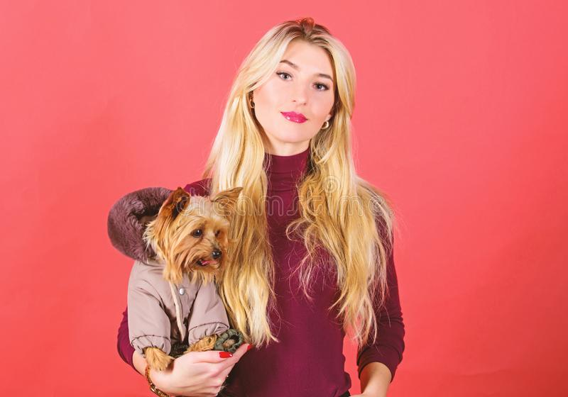 Which dog breeds should wear coats. Woman carry yorkshire terrier. Dogs need clothes. Girl adorable blonde hug little. Dog in coat. Apparel and accessories. Pet royalty free stock images