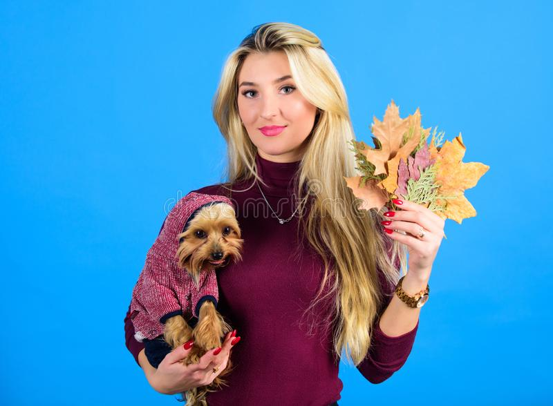 Which dog breeds should wear coats. Woman carry yorkshire terrier. Dogs need clothes. Girl attractive blonde hug cute stock photography