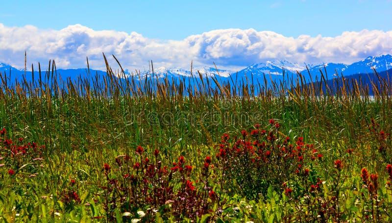 Whild在冰河海湾国家公园,阿拉斯加开花 免版税库存照片