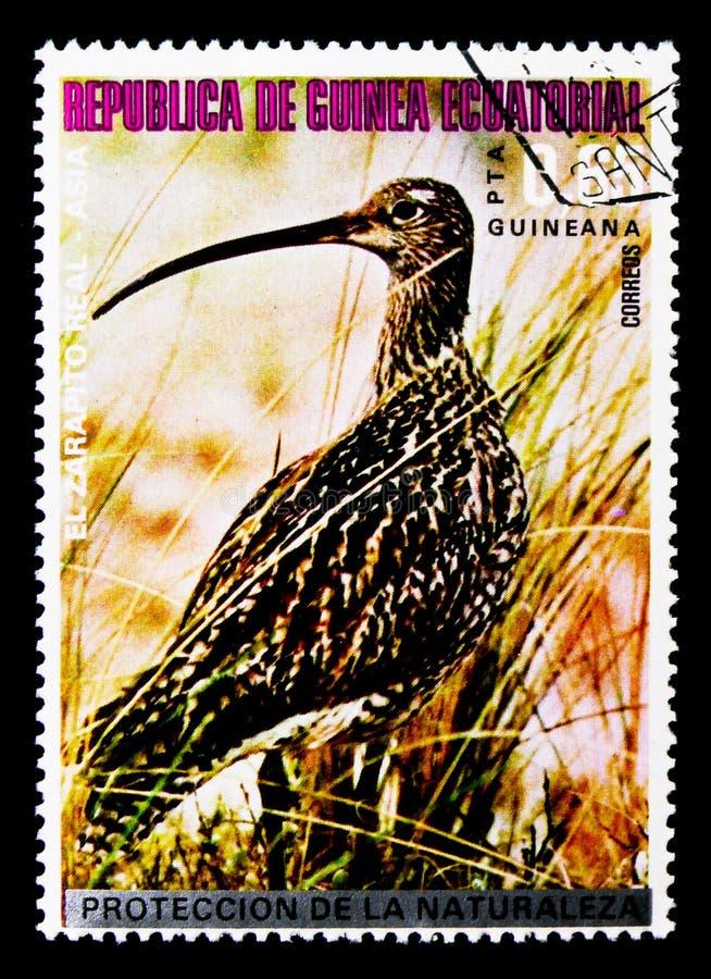 Whimbrel (phaeopus) Numenius, азиатское serie птиц, около 1976 стоковые фото