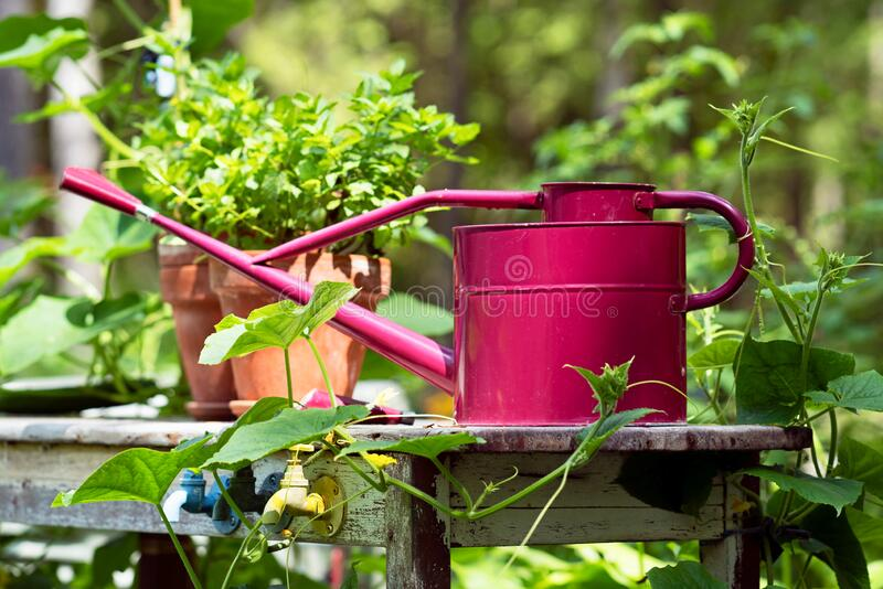 Whimsical Garden with Vintage Red Watering can stock images