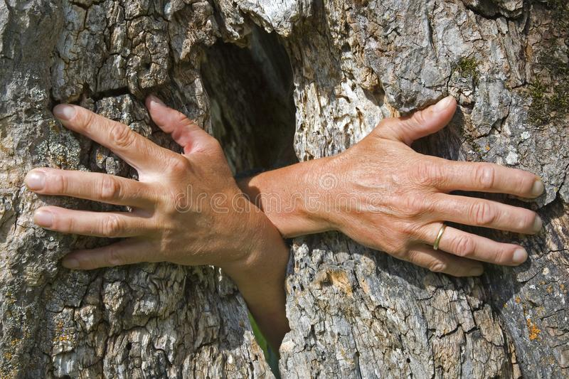 Ghost hands growing out of a tree royalty free stock photos