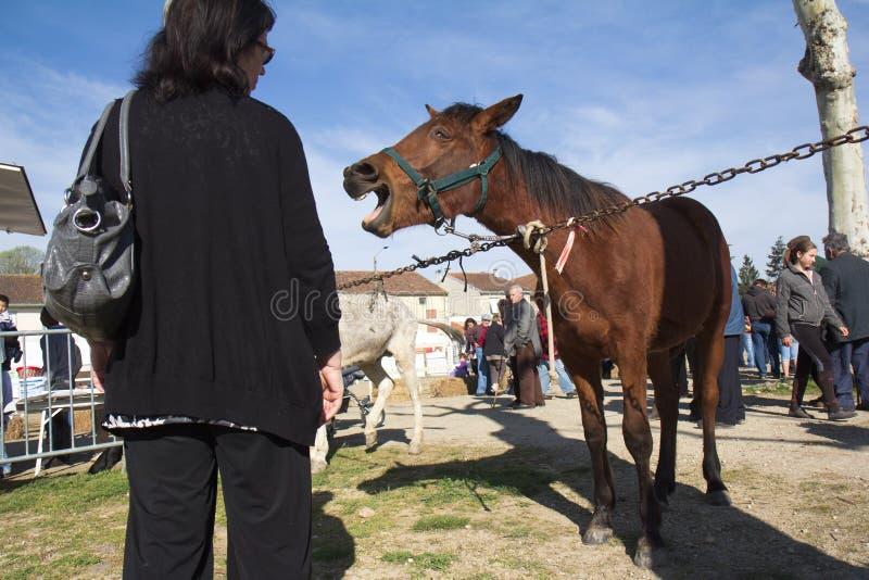 Whinnying Pferd lizenzfreie stockfotografie