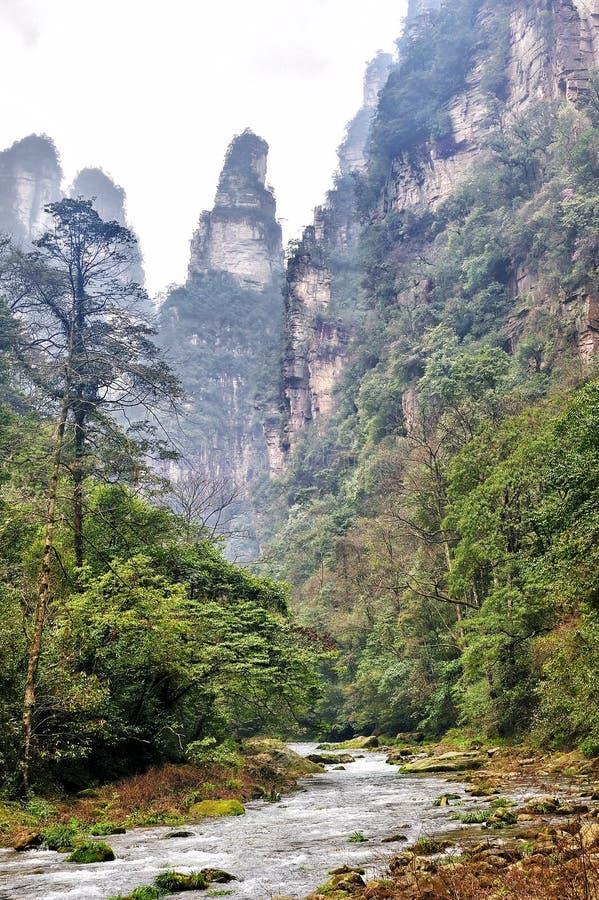 Whip Stream Trail d'or dans le nuage à Zhangjiajie Forest Park naturel, Hunan, Chine photographie stock libre de droits