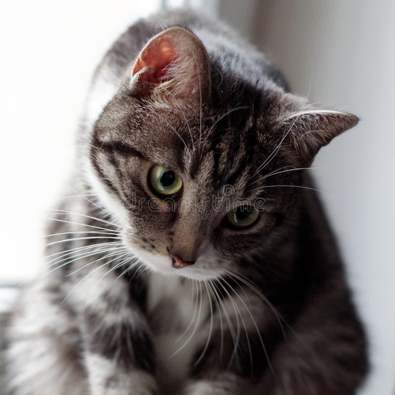 Whiskas-Katze lizenzfreie stockfotografie