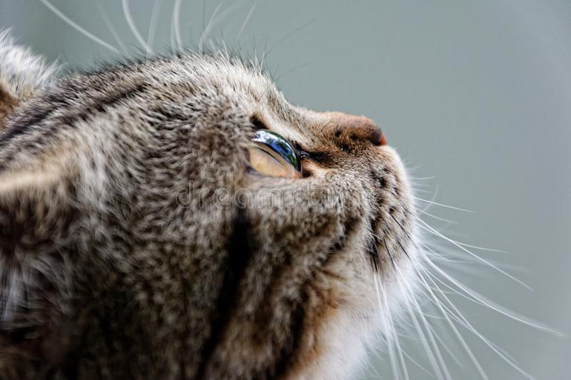 Whiskers, Cat, Fauna, Close Up stock image