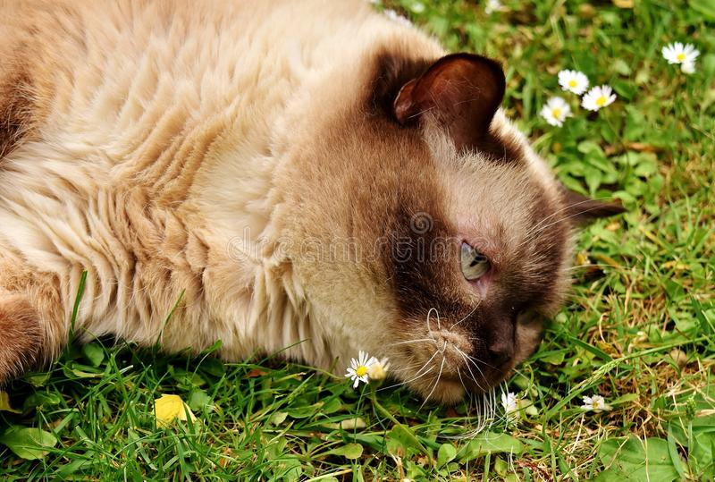 Whiskers, Fauna, Cat, Grass stock photography