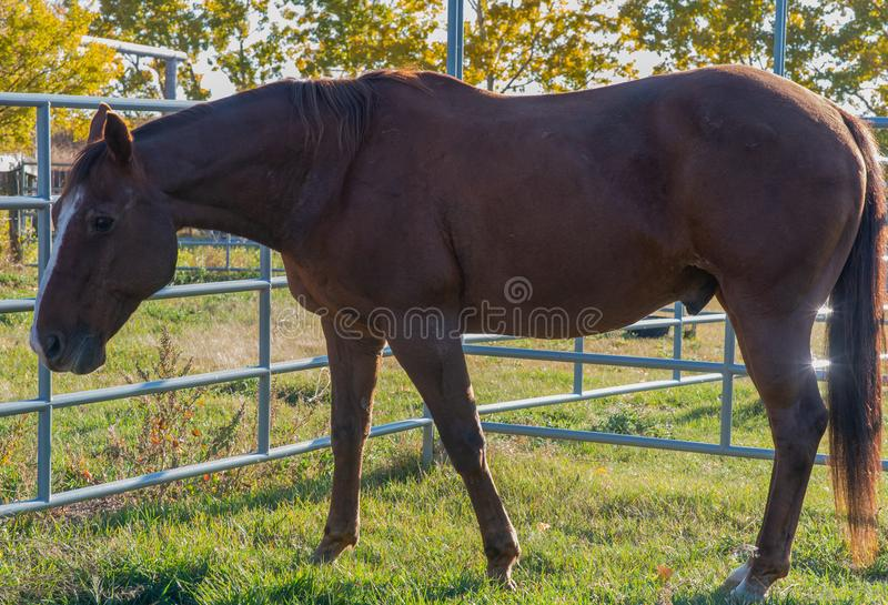 Whiskey in the pen stock photo