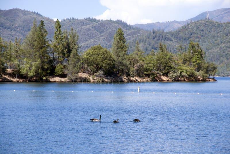 Download Whiskeytown Lake Beach stock photo. Image of green, lake - 44345470