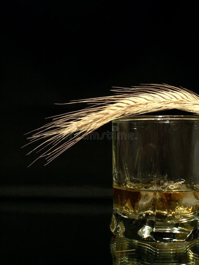 Download Whisky e frumento fotografia stock. Immagine di concetto - 3879660