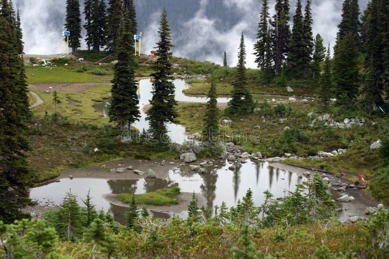 Whistler, Canada. Blackcomb Mountain near Whistler in Summer royalty free stock image