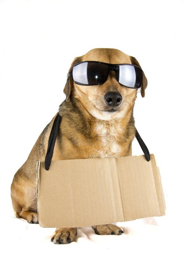 Cão cego imagem de stock royalty free