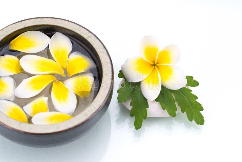 Whit kwiatu płatka kropla na wodzie porcelanowy puchar, zielony liść na sto obraz royalty free