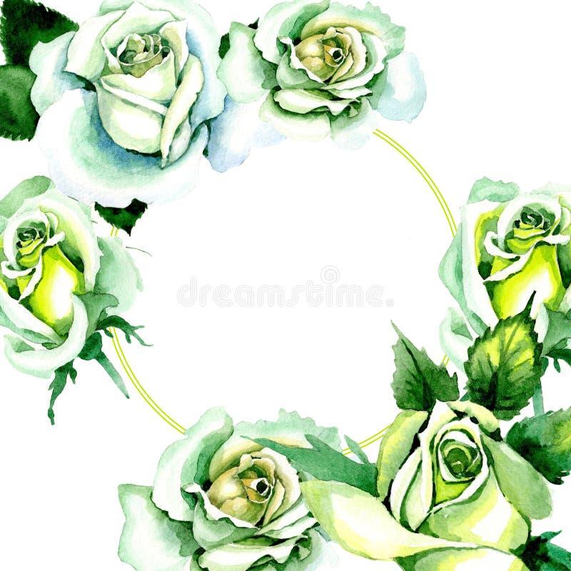 Whit roses. Floral botanical flower. Wild spring leaf wildflower frame. Aquarelle wildflower for background, texture, wrapper pattern, frame or border royalty free illustration
