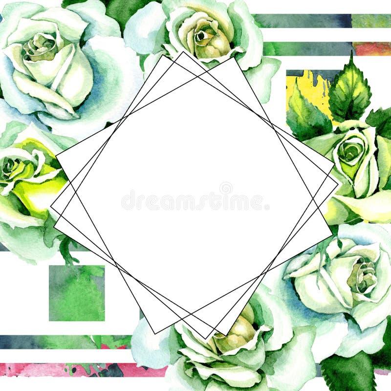 Whit roses. Floral botanical flower. Wild spring leaf wildflower frame. Aquarelle wildflower for background, texture, wrapper pattern, frame or border stock illustration